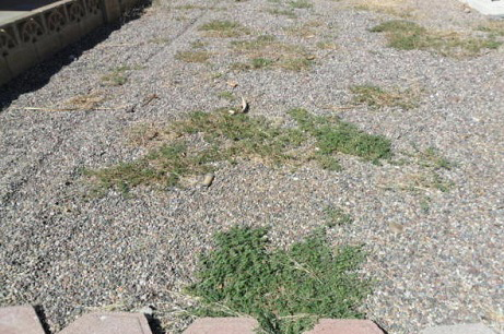 weed control in grand junction