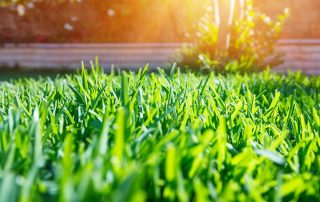 green grass with the sun coming up