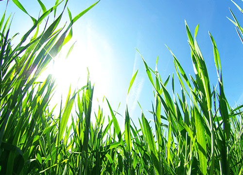 Organic Lawn Care Grand Junction CO