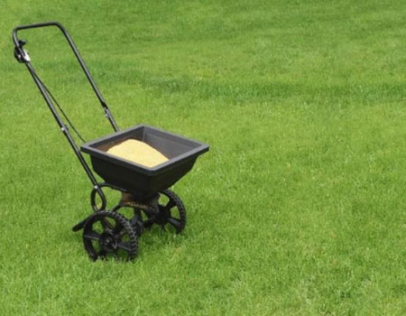How to maintain your lawn by feeding it regularly