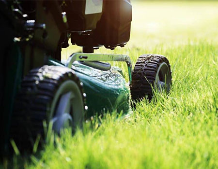 How to maintain your lawn by mowing it at the right height