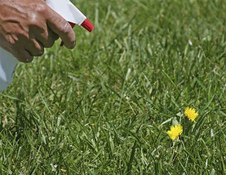 Killing weeds with spot sprayer to control weeds in a lawn